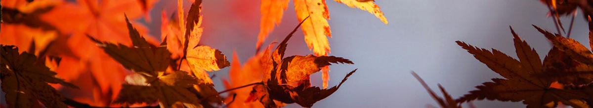 Autumn Indulgence