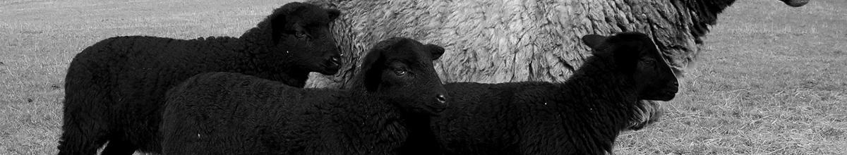 The Black Sheep X John Smedley