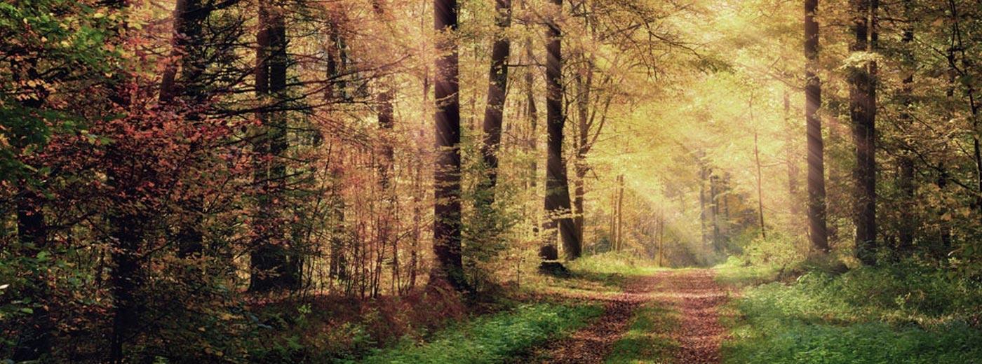 Autumnal Edit